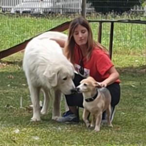 AliceS. è Pet sitter Bassano del grappa (VI), Dog walker Bassano del grappa (VI), Addestratore Bassano del grappa (VI)